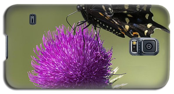 The Eastern Black Swallowtail  Galaxy S5 Case by Ricky L Jones