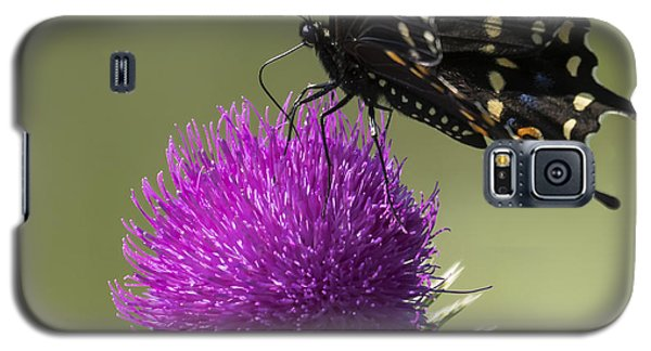The Eastern Black Swallowtail  Galaxy S5 Case