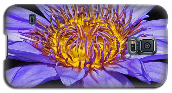 The Eye Of The Water Lily Galaxy S5 Case by Emmy Marie Vickers