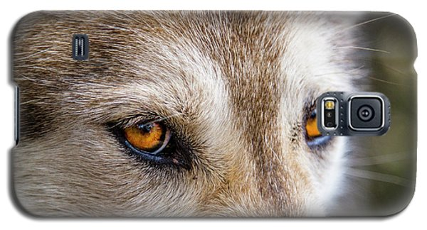 Galaxy S5 Case featuring the photograph The Eyes Of A Great Grey Wolf by Teri Virbickis