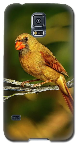 The Female Cardinal Galaxy S5 Case