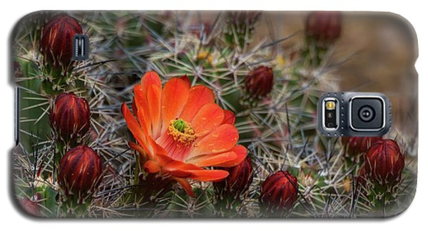 Galaxy S5 Case featuring the photograph The First Bloom  by Saija Lehtonen