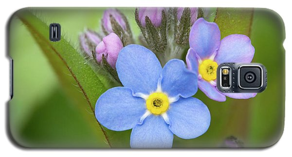 The First Blossom Of The Forget Me Not Galaxy S5 Case