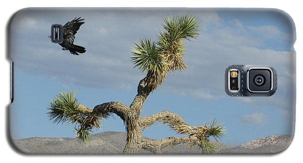 Galaxy S5 Case featuring the photograph The Flight Of Raven. Lucerne Valley. by Ausra Huntington nee Paulauskaite