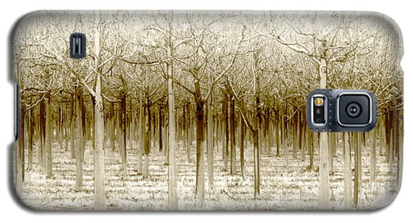 The Forest For The Trees Galaxy S5 Case