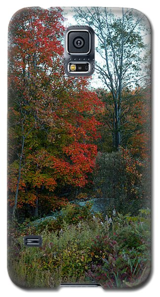 The Forest Galaxy S5 Case by Joseph G Holland