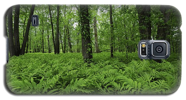 The Forest Of Ferns Galaxy S5 Case