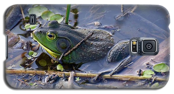 The Frog Remains Galaxy S5 Case