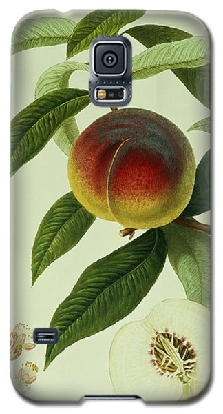 The Galande Peach Galaxy S5 Case by William Hooker