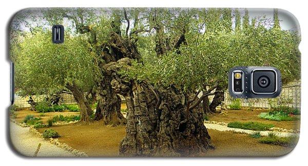 The Garden Of Gethsemane Galaxy S5 Case