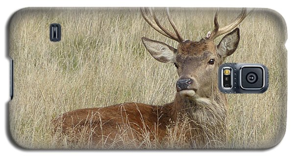 Galaxy S5 Case featuring the photograph The Gentle Stag by LemonArt Photography