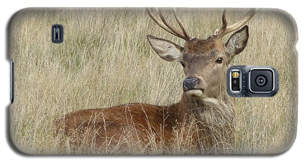 The Gentle Stag Galaxy S5 Case by LemonArt Photography