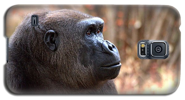 the Gorilla thinks Galaxy S5 Case by Ruth Jolly