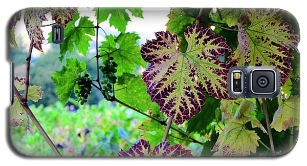 Galaxy S5 Case featuring the photograph The Grape Vine by Corinne Rhode