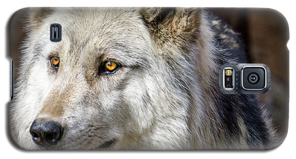 Galaxy S5 Case featuring the photograph The Gray Wolf by Teri Virbickis
