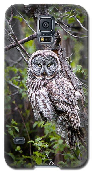 The Great Gray Galaxy S5 Case