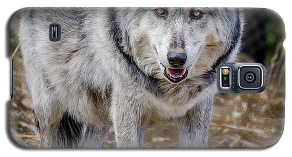 Galaxy S5 Case featuring the photograph The Great Gray Wolf by Teri Virbickis