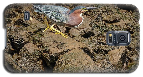 The Green Heron Galaxy S5 Case by Jerry Cahill