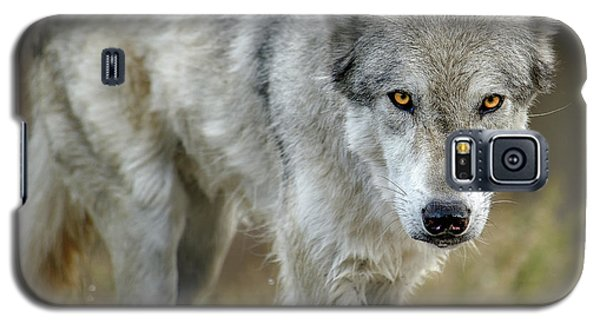 The Grey Wolf Shake Galaxy S5 Case