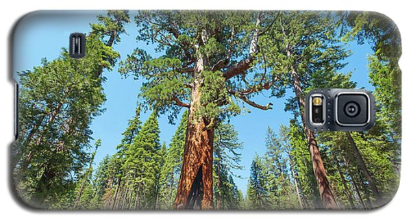 The Grizzly Giant- Galaxy S5 Case