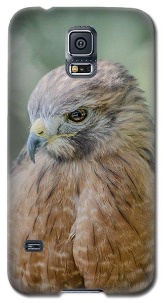 The Hawk Galaxy S5 Case by David Collins