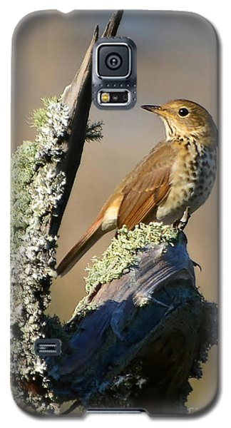 The Hermit Thrush Galaxy S5 Case