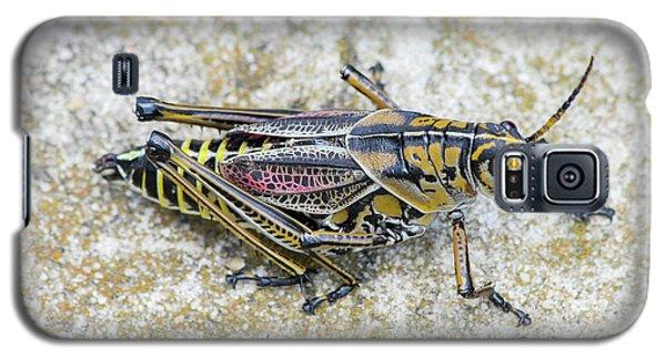 The Hopper Grasshopper Art Galaxy S5 Case by Reid Callaway