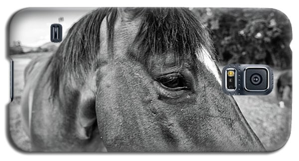 the Horses of Blue Ridge 1 Galaxy S5 Case by Blake Yeager