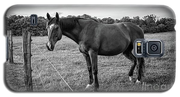 the Horses of Blue Ridge 2 Galaxy S5 Case by Blake Yeager