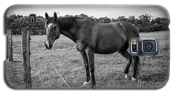 the Horses of Blue Ridge 2 Galaxy S5 Case