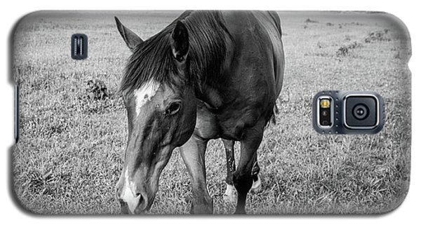 the Horses of Blue Ridge 3 Galaxy S5 Case by Blake Yeager