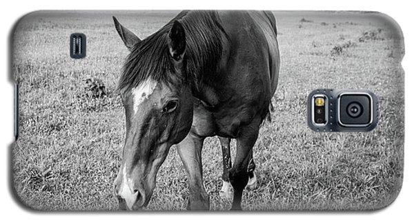 the Horses of Blue Ridge 3 Galaxy S5 Case