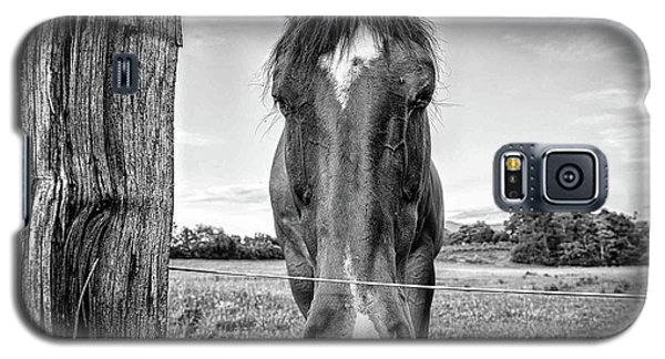 the Horses of Blue Ridge 4 Galaxy S5 Case by Blake Yeager
