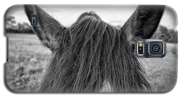 the Horses of Blue Ridge 6 Galaxy S5 Case by Blake Yeager