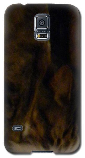 Galaxy S5 Case featuring the photograph The Inn Creeper And His Pet by Christophe Ennis