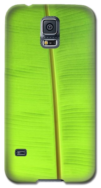The Jungle Illuminated Galaxy S5 Case