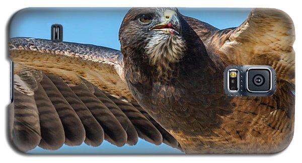 The Kill Wildlife Art By Kaylyn Franks Galaxy S5 Case