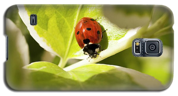 The Ladybug  Galaxy S5 Case