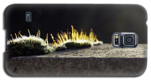 The Last Sun Of December Galaxy S5 Case