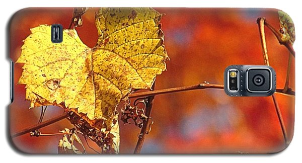 The Last Yellow Leaves Galaxy S5 Case