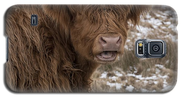 The Laughing Cow, Scottish Version Galaxy S5 Case
