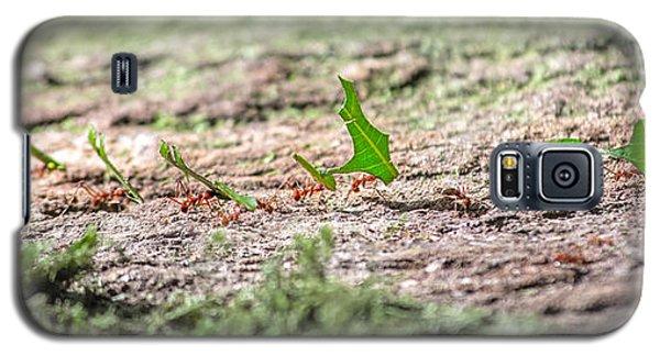 The Leaf Parade  Galaxy S5 Case by Betsy Knapp