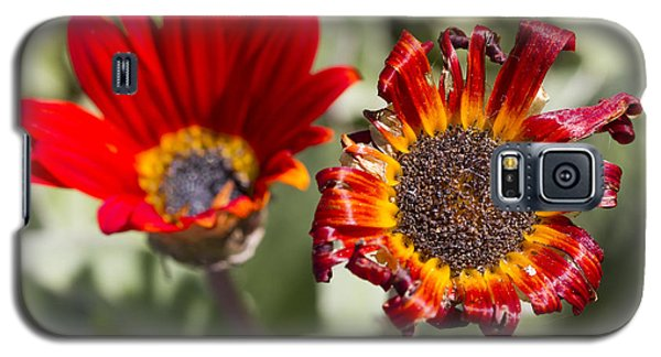 Galaxy S5 Case featuring the photograph The Life And Death Of A Flower by Nathan Rupert