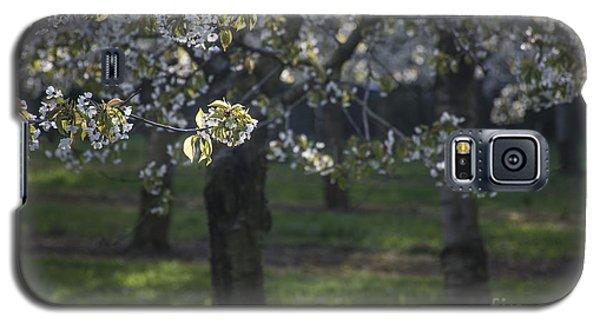 The Life Awakes3 Galaxy S5 Case by Bruno Santoro