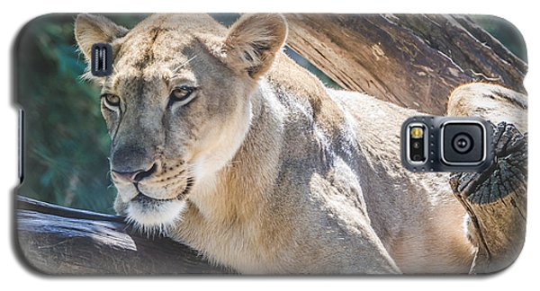 The Lioness Galaxy S5 Case by David Collins