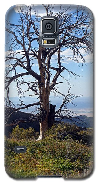 Galaxy S5 Case featuring the photograph The Lone Tree by Juls Adams