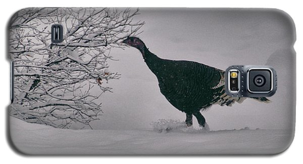 The Lone Turkey Galaxy S5 Case