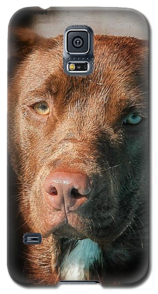 Galaxy S5 Case featuring the photograph The Look by Eleanor Abramson