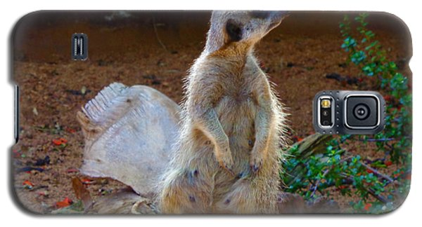 The Lookout - Meerkat Galaxy S5 Case