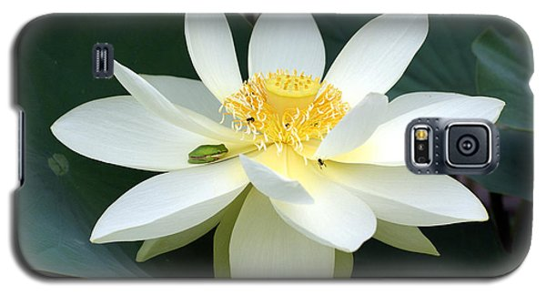 Galaxy S5 Case featuring the photograph The Lotus Flower The Frog And The Bee by Gary Crockett